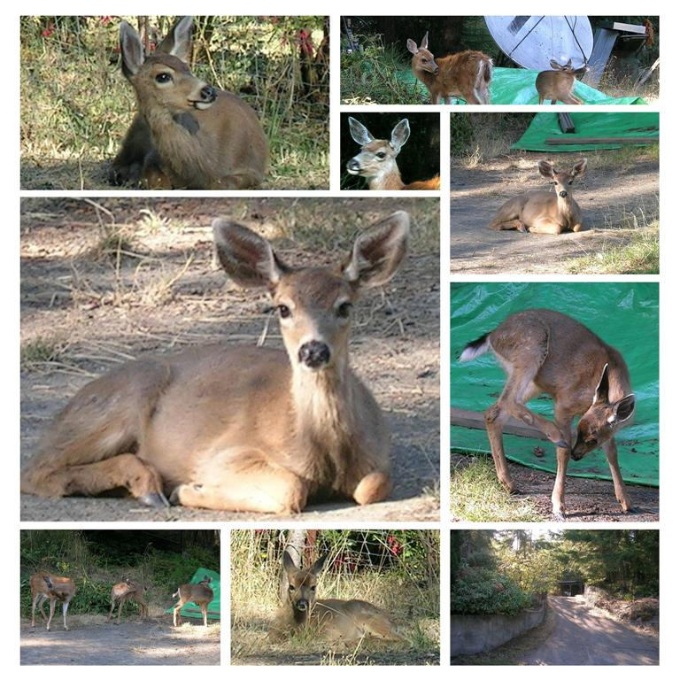 Deer Collage - Photos by Michael - Sept. 12, 2005